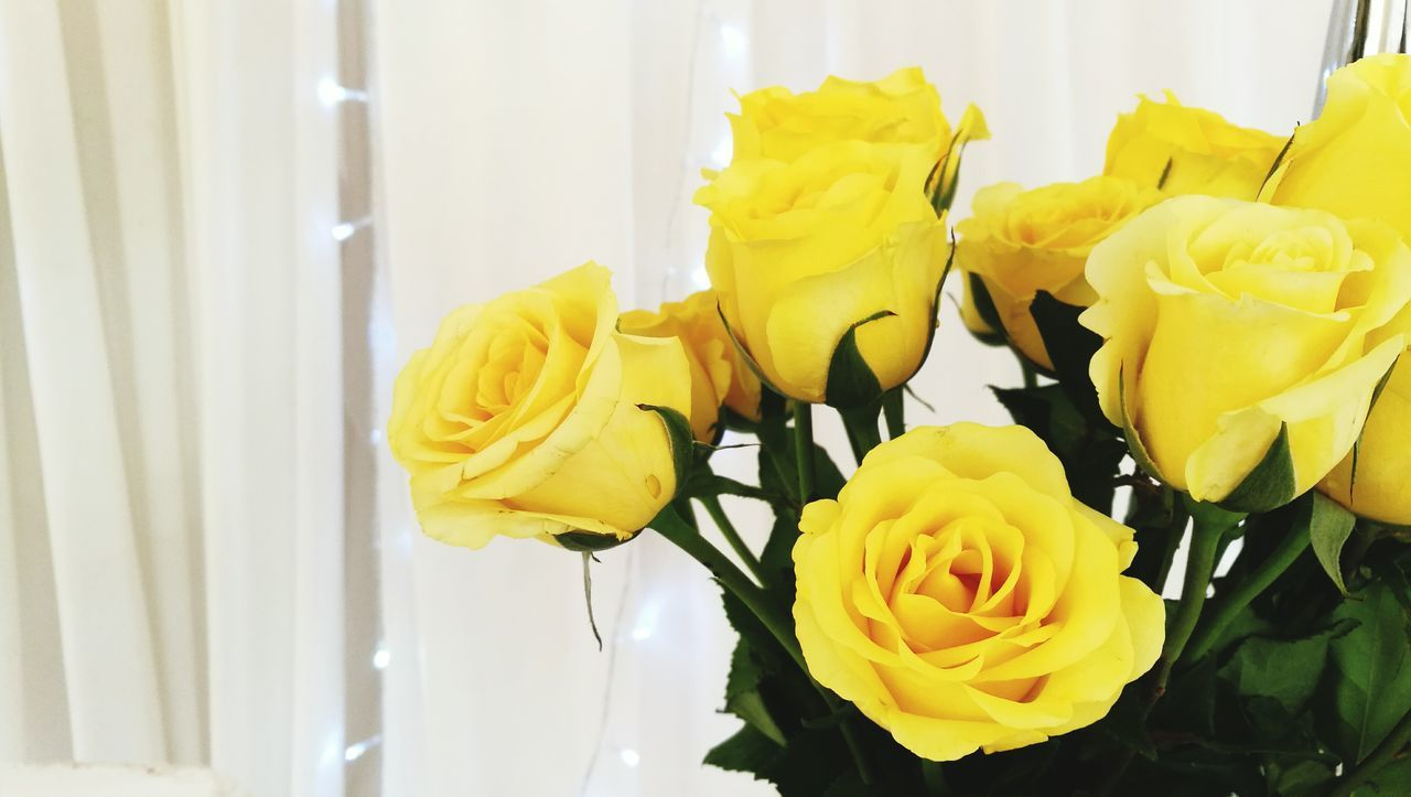 Flower Fragility Yellow Close-up Indoors  Nature Curtain Beauty In Nature Freshness No People Flower Head Day Rosé Yellow Flower Beauty In Nature Petal Blooming Plant Nature Yellow Roses Decoration