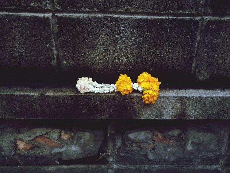 พวงมาลัย Flower No People Close-up Outdoors Yellow White Garland Brick Wall Wall Fence Street Old Throw Away Discard Garbage Worship Belief Believe Buddhism Buddhist Background Abstract Bangkok Thailand Paint The Town Yellow