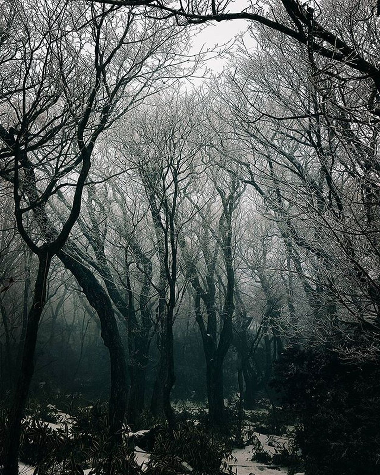 Even there is death in winter..everything is still beautiful..😌 Adzventure2015 Winter Trees Winter Naturelovers Trees