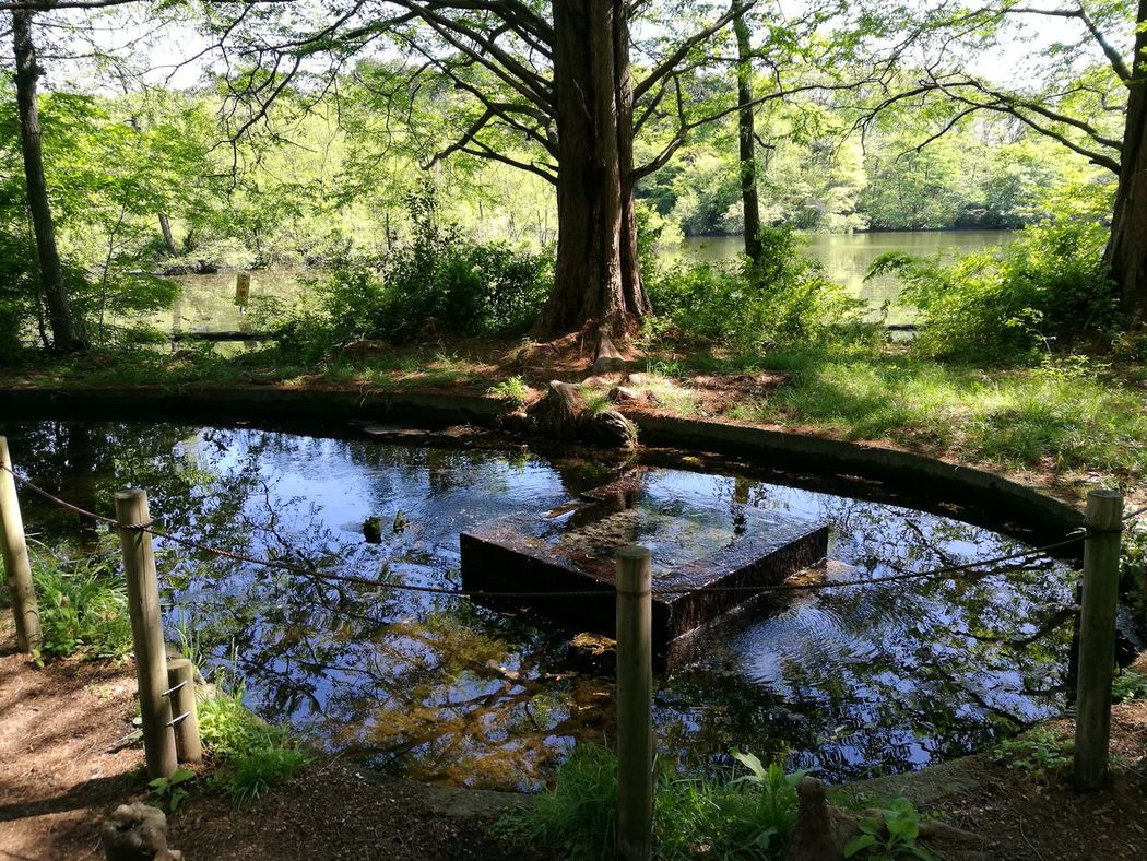 Tree Day Nature No People Outdoors Water Growth Forest Nature Foest Foest🌳 Nature Photography Park Water_collection Parks Water Park Water Drops Japanese Garden