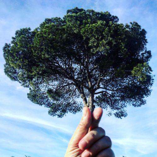 Tree Sky Hand My Hand  Cup Of Tree