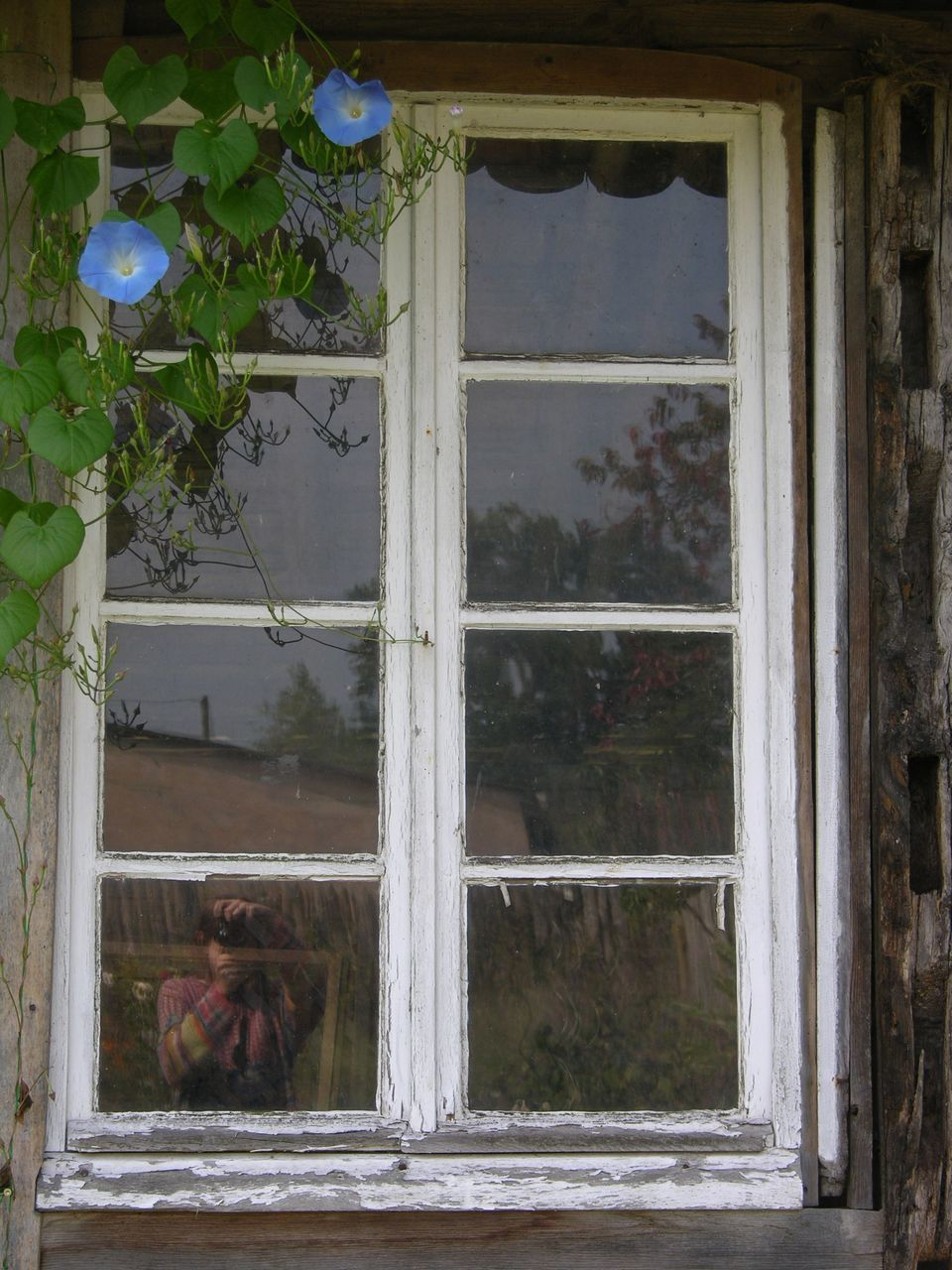 window, day, pets, built structure, architecture, no people, building exterior, tree, indoors, domestic animals, mammal, animal themes