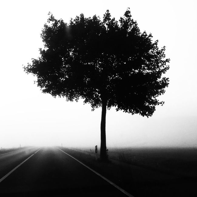 Shootermag IPhoneography AMPt_community Black And White Blackandwhite Still Life NEM Landscapes Trees EyeEm Best Shots Streetphoto_bw