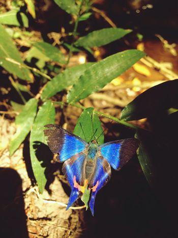 Butterflies Beauty Colorful Beautiful Nature