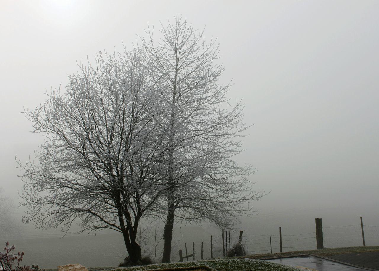 Tree Landscape Landscape_photography Bäume Nebel Fog Nature Photography