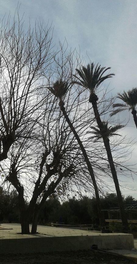 Nature Tree Beauty In Nature Marrakesh❤ Marrakech, My Love... Marrakech, Morocco Marrakech Medina, Morocco Marrakesch Marrakech Morocco Marrakech