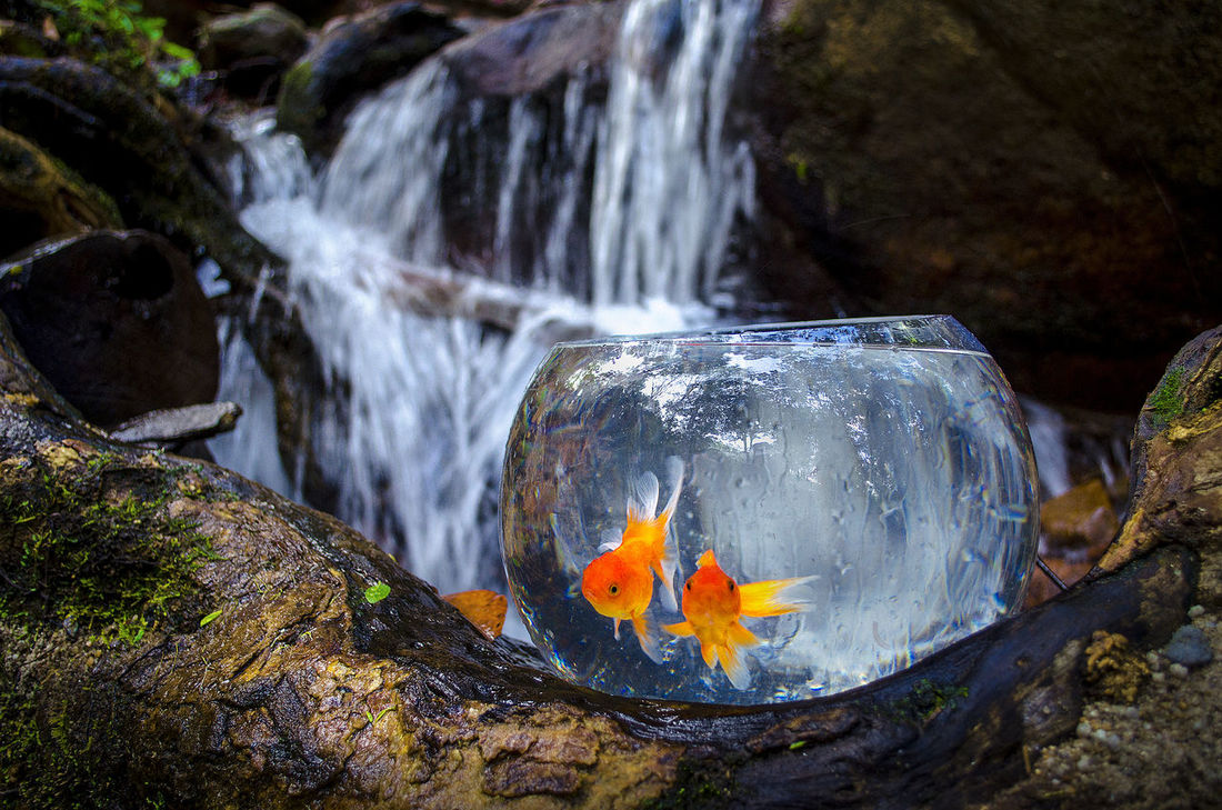 Animal Beauty In Nature Close-up Day Fish Fish Tank Forest Golden Fish Motion Nature Nature No People Outdoors Scenics The Secret Spaces Water Waterfall