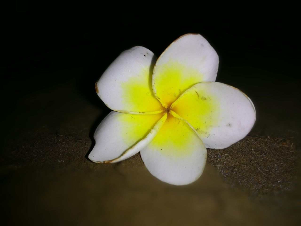 fragility, freshness, no people, petal, studio shot, close-up, flower head, flower, beauty in nature, black background, yellow, nature, food, day, outdoors, frangipani