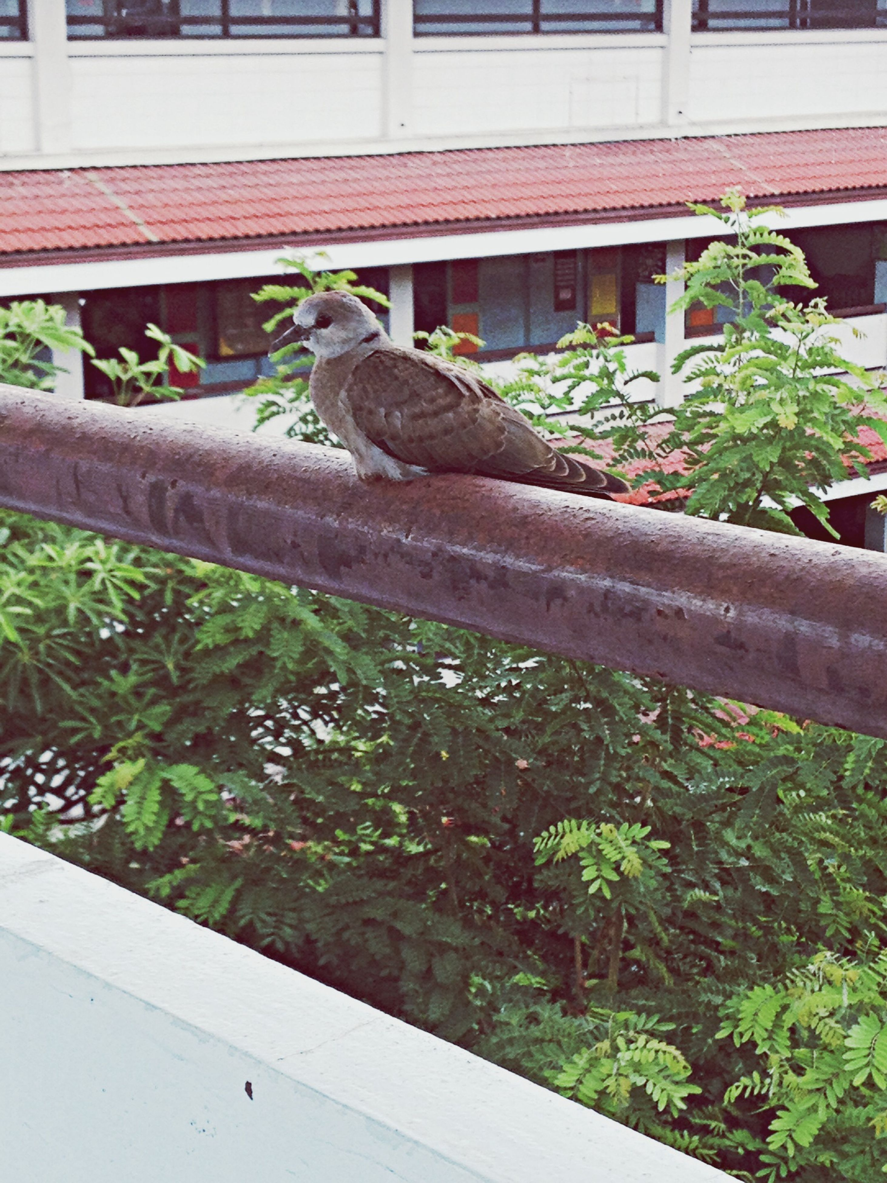animal themes, one animal, bird, animals in the wild, plant, wildlife, built structure, building exterior, perching, green color, architecture, growth, outdoors, front or back yard, day, potted plant, railing, nature, no people, leaf