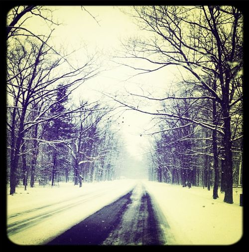 When I went to michigan in April. Love the snow Snow ❄ Trees
