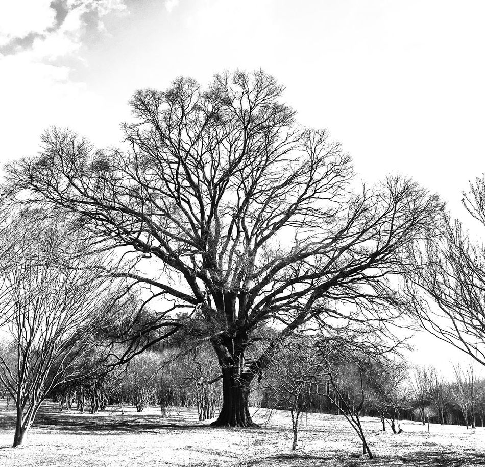 Tree Beauty In Nature EyeEm Best Shots - Black + White Blackandwhite Bw_collection Streetphotography