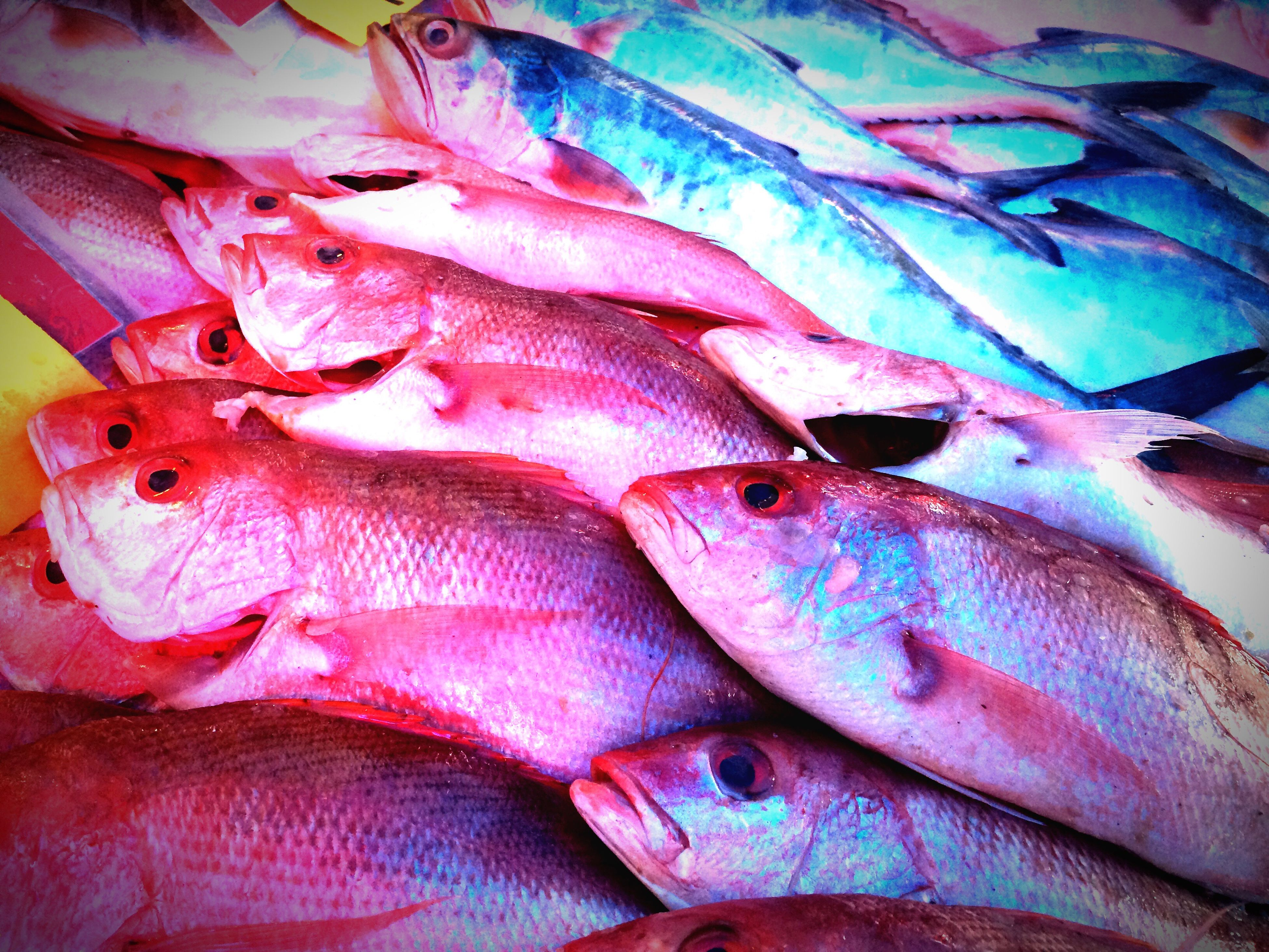 full frame, backgrounds, for sale, fish, retail, variation, abundance, choice, large group of objects, market stall, market, sale, indoors, multi colored, close-up, seafood, dead animal, fish market, still life, raw food