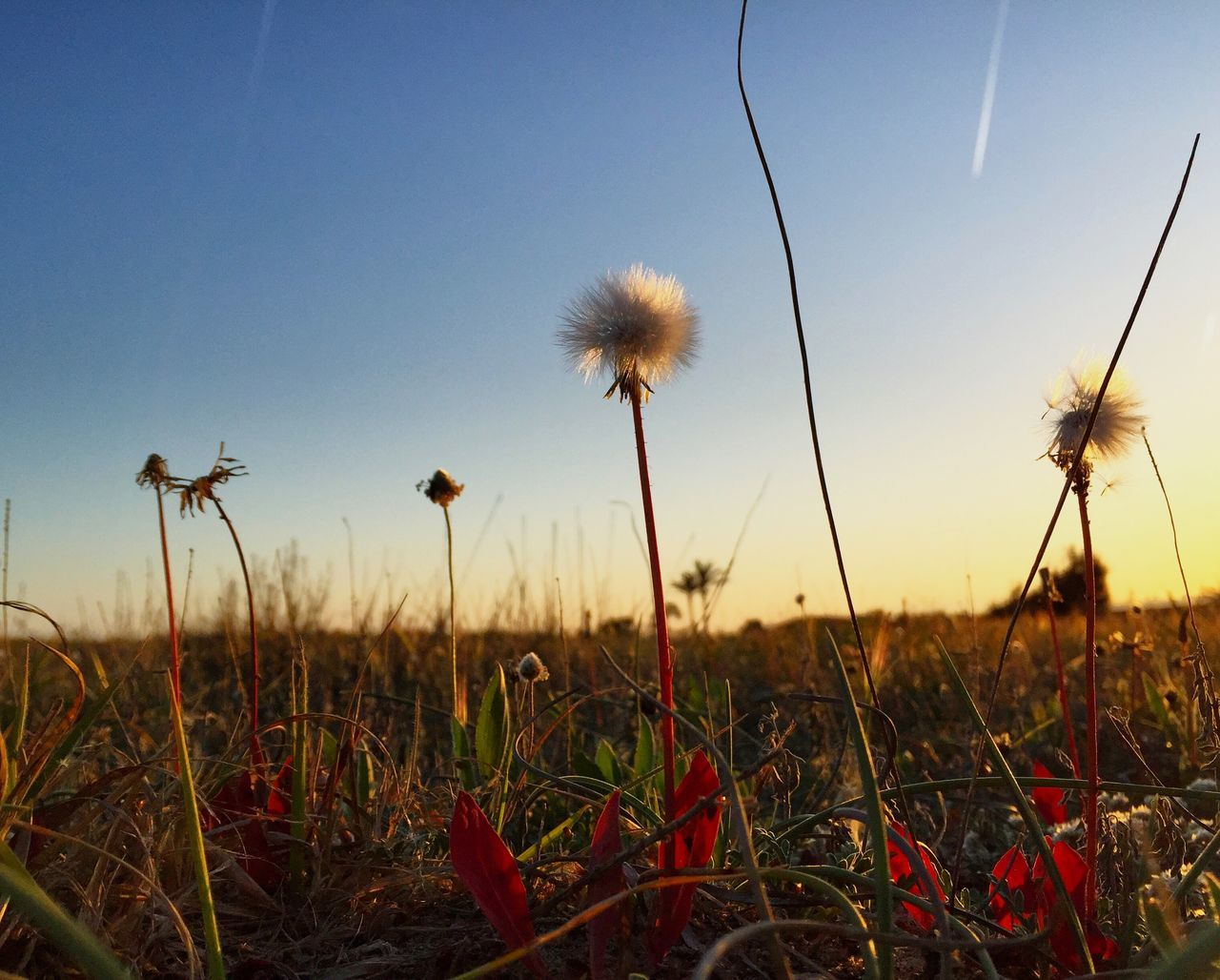 Growth Nature Field Flower Plant Beauty In Nature No People Outdoors Uncultivated Grass Tranquility Day Fragility Sky Agriculture Freshness Landscape Rural Scene Scenics Flower Head On The Beach Nature Photography Freshness Landscape_Collection Eye4photography