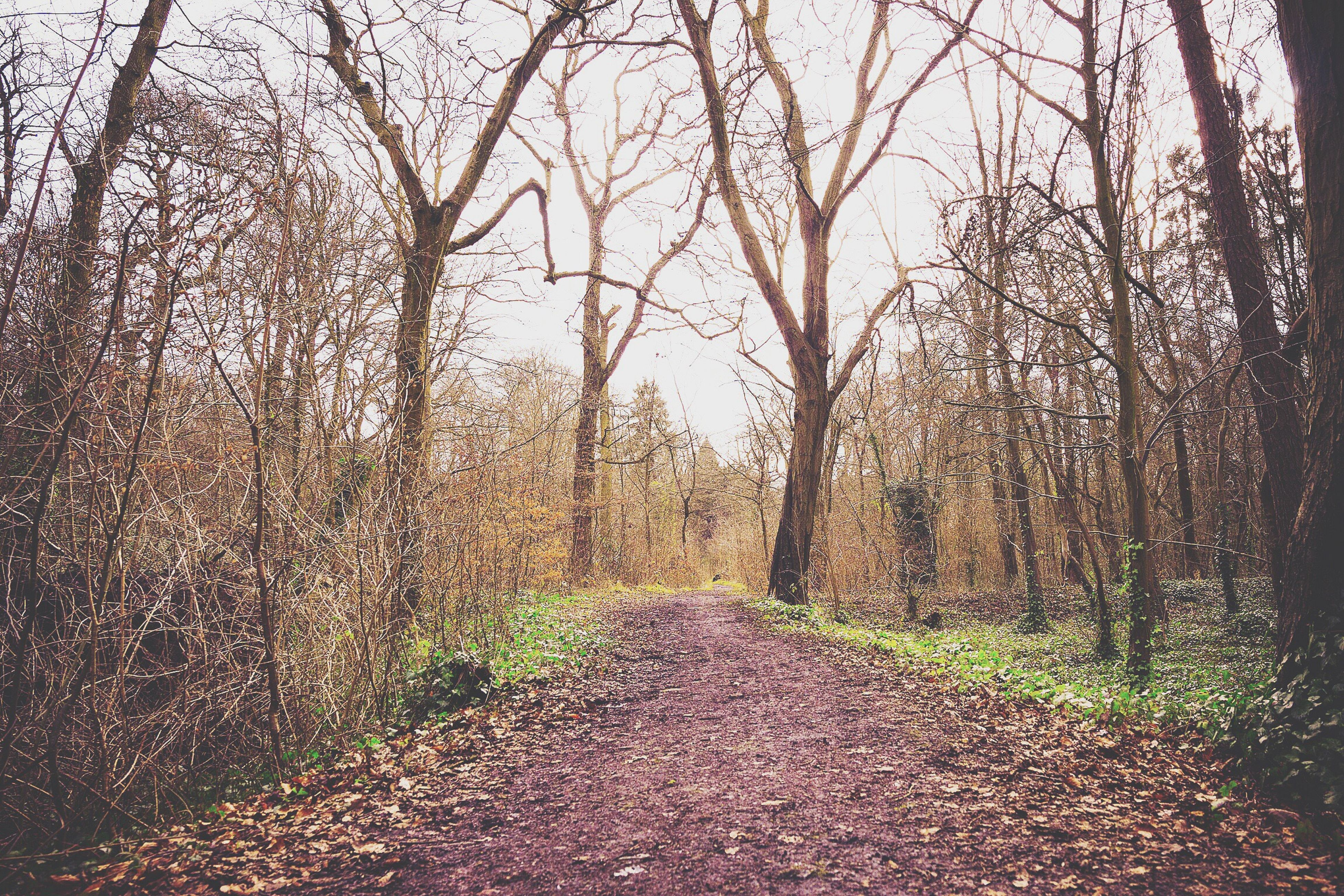 tree, the way forward, tranquility, nature, tranquil scene, branch, autumn, growth, bare tree, beauty in nature, scenics, dirt road, diminishing perspective, forest, footpath, landscape, tree trunk, leaf, non-urban scene, outdoors