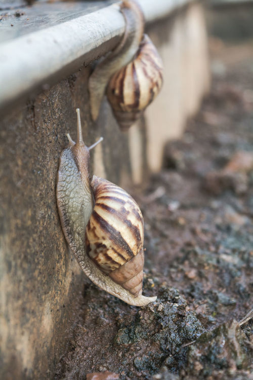 Snail Life Beauty In Nature Snails In Shells Snail🐌