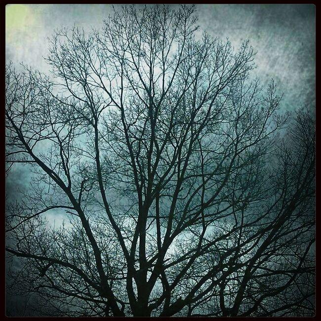 Branching Out. Tree_collection  Blackandwhitebutnot Eye Em Filter