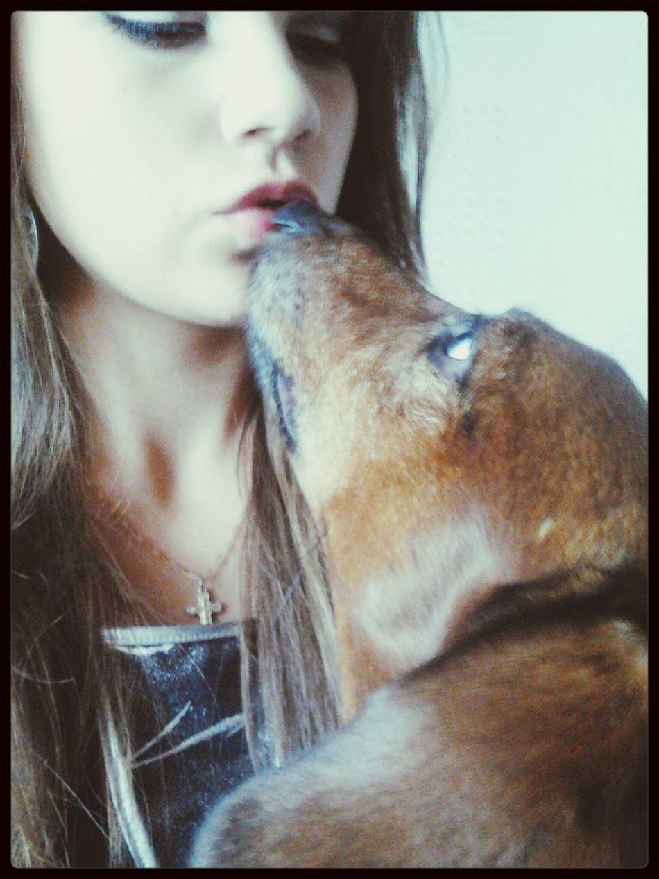 Dog Dachshund I And My Dog Home
