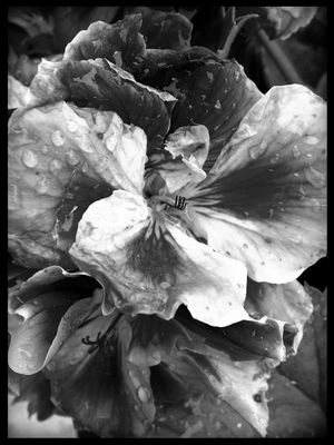 blackandwhite at Flora Garten by quitzi