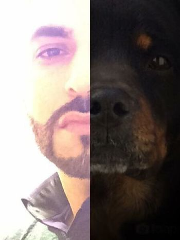 EyeEm Gallery I Love My Dog Hey World Making History Love Me Or Hate Me, I Could Careless What You Think Or Say About Me!  First Eyeem Photo Living Life Cheese Self Portrait Selfie ✌ Eye4photography  Cheap Shot Geting Inspired Thats Me ♥ That's My Dog Just For Fun Rottweiler Rottweilerlove Rottweilerlife Lookalike Petowners Petowner