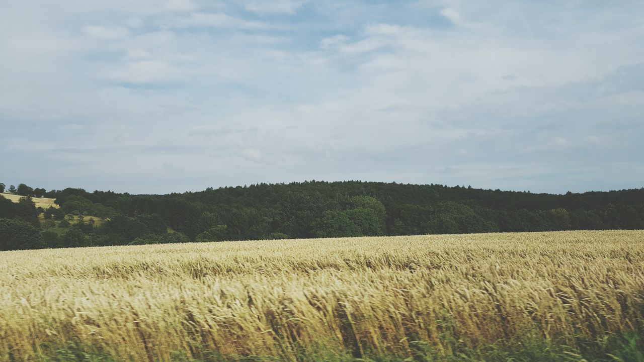 Beautiful stock photos of baum,  Agriculture,  Beauty In Nature,  Cereal Plant,  Cloud - Sky