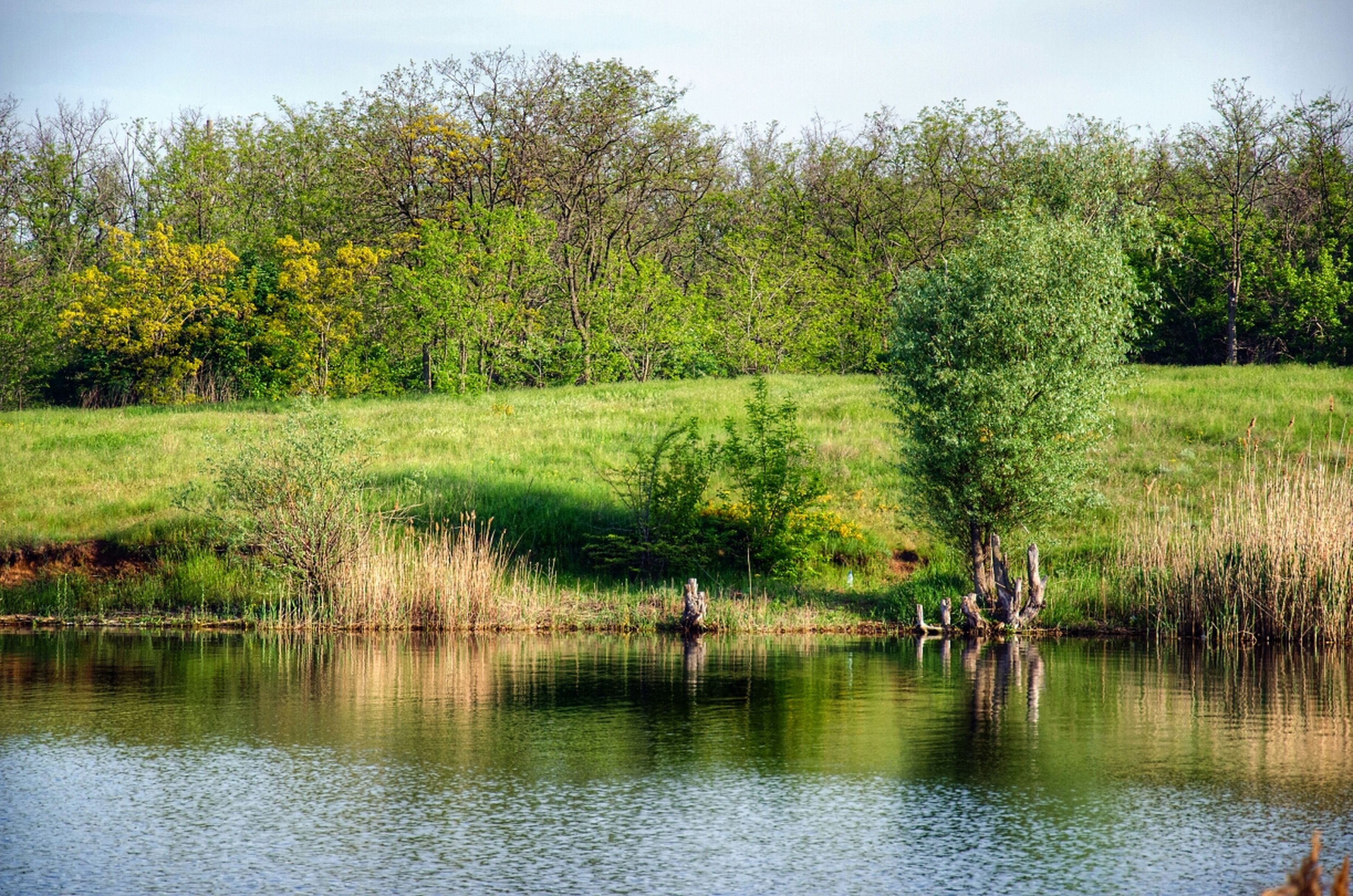 tree, water, tranquility, reflection, lake, tranquil scene, growth, beauty in nature, nature, scenics, green color, waterfront, grass, idyllic, pond, river, sky, day, plant, outdoors