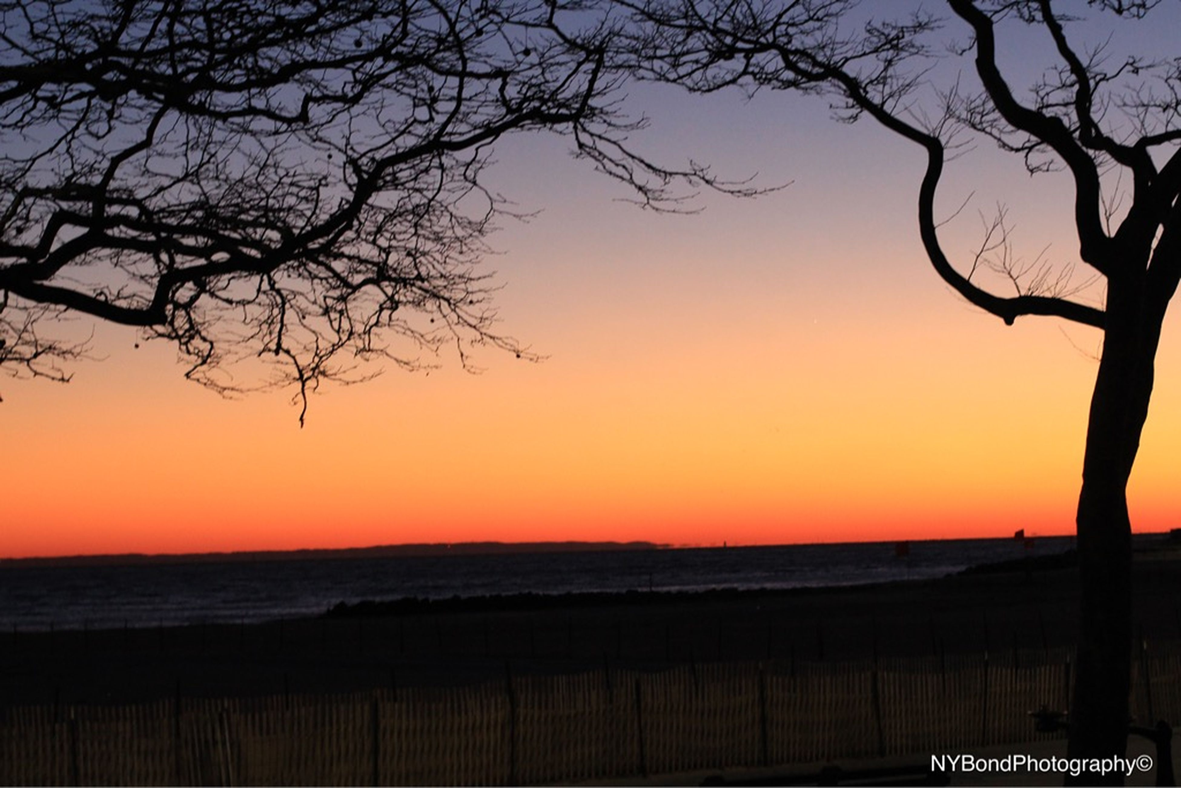 sunset, branch, bare tree, silhouette, tree, scenics, tranquility, tranquil scene, orange color, water, beauty in nature, nature, sea, clear sky, sky, idyllic, horizon over water, outdoors, dusk, no people