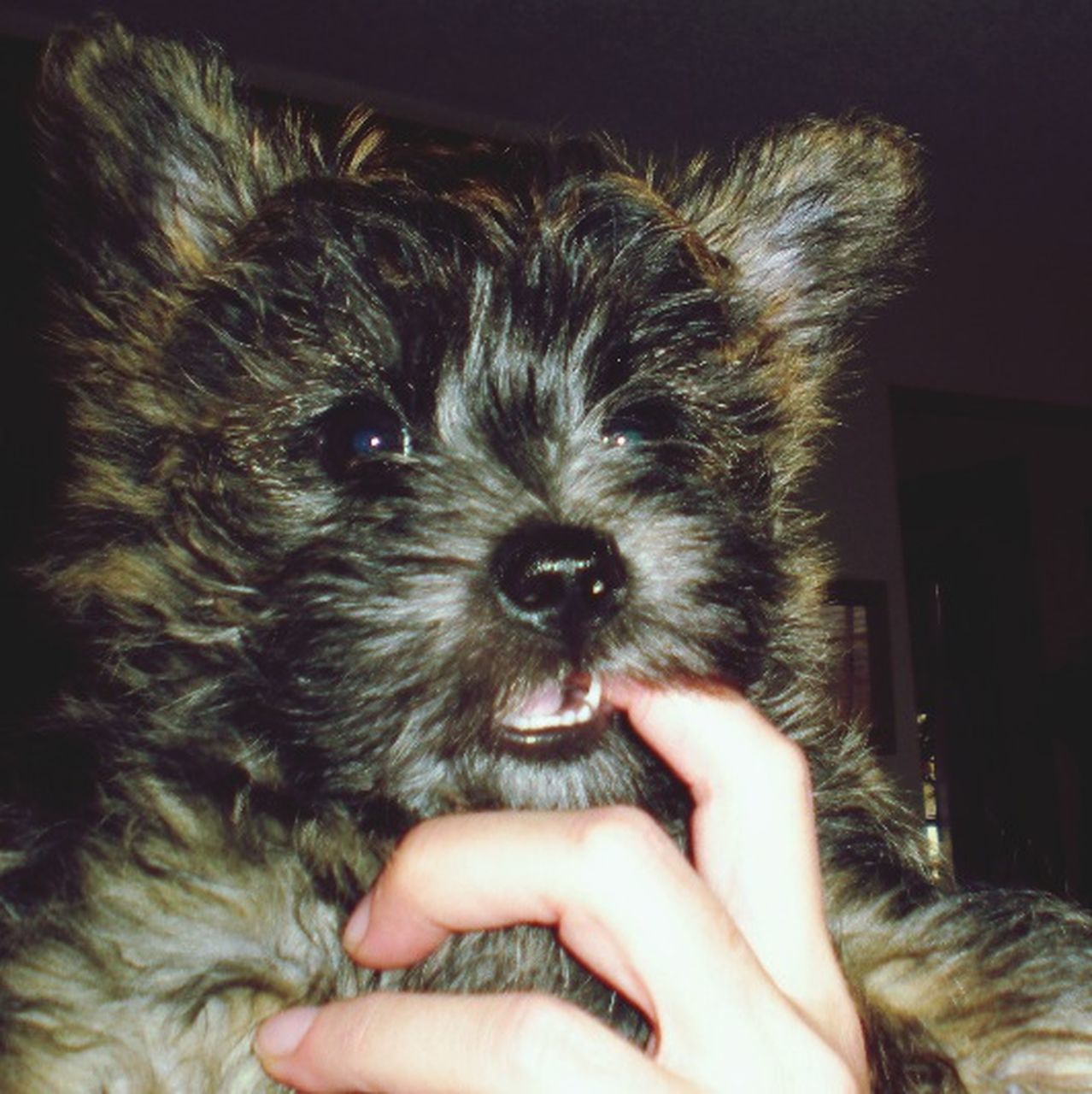 pets, animal themes, one animal, person, domestic animals, indoors, dog, holding, part of, mammal, lifestyles, unrecognizable person, cropped, human finger, domestic cat, close-up