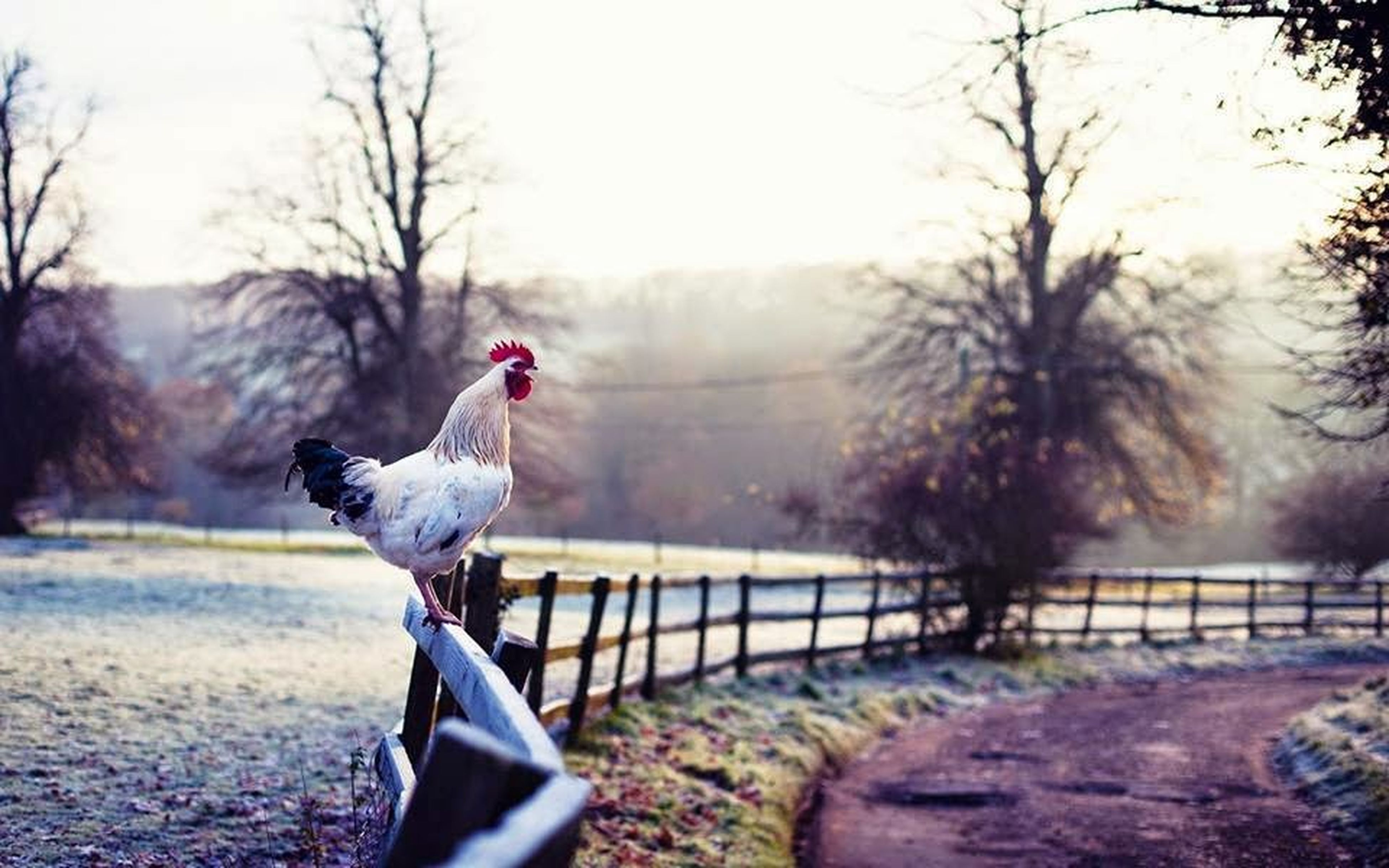 one animal, bird, tree, perching, animals in the wild, full length, day, rural scene, snow covered, tranquility, zoology, nature, focus on foreground, non-urban scene, solitude, tranquil scene, remote