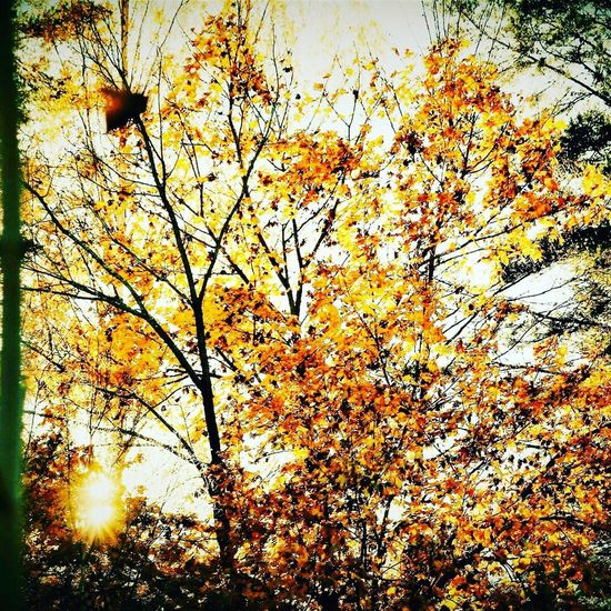 Autumn Nature Beauty In Nature Low Angle View Tree Change Branch Outdoors No People Growth Tranquility Leaf Day Sky Scenics Flower Close-up