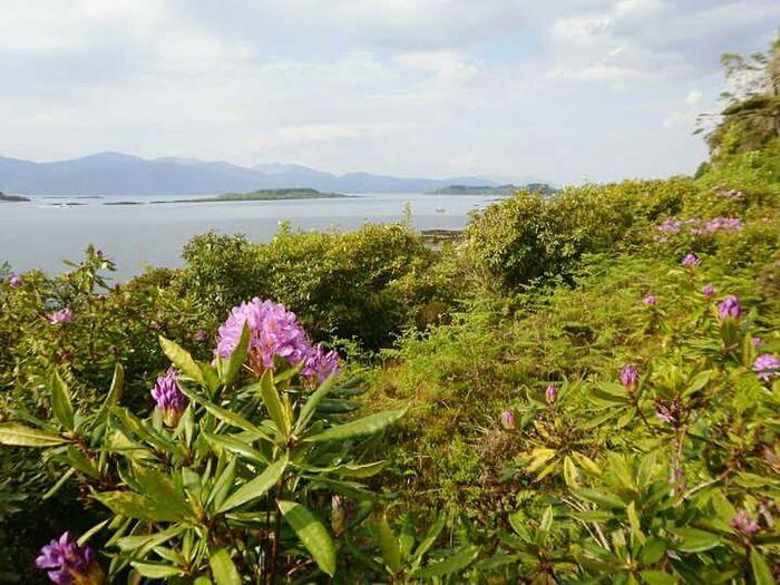 2010, Port Appin Flower Water Scotland Scottish Highlands Summer Time  Freshness Port Appin