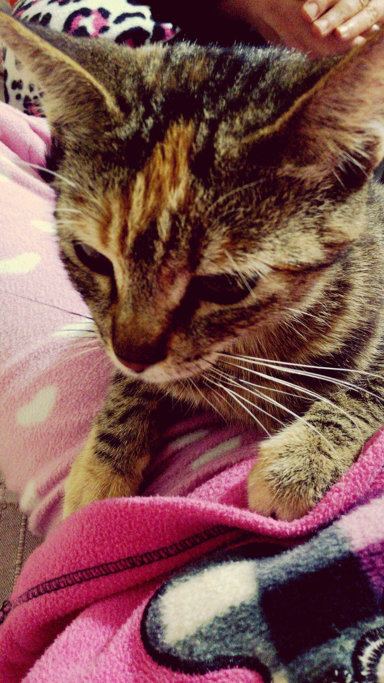 My Cat Goodnight✌ Kedicik Kızım :)