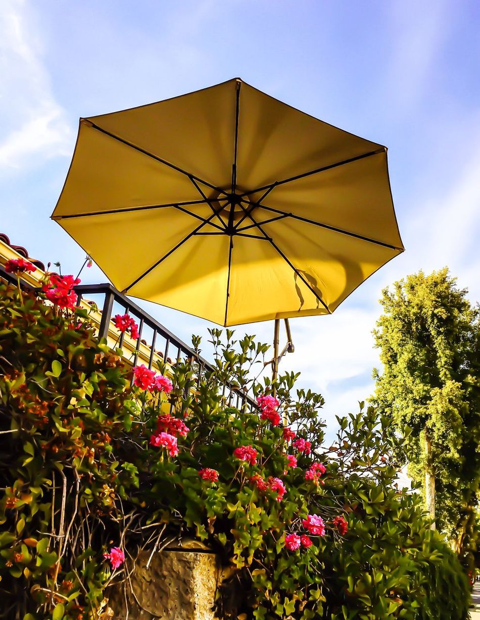 Outdoor patio umbrella like a flying saucer Flower Low Angle View Growth Day Yellow Nature Outdoors No People Fragility Beauty In Nature Freshness Sky Close-up UFO Sightings Abstract Photography Concept Patio Umbrella Surreal Design Reality Is The Only Word In The Language That Should Always Be Used In Quotes EyeEmNewHere Flying Saucer Suspended In Time Suspend Suspend Belief