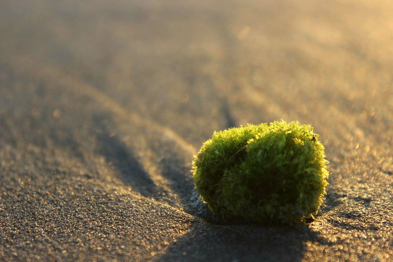 nature, green color, sunlight, no people, close-up, sand, day, outdoors, growth, shadow, arid climate