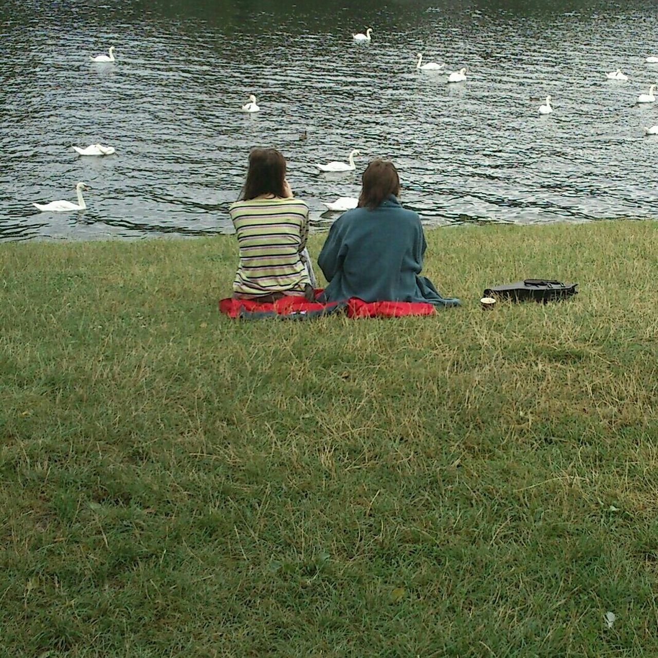 Capture Berlin Two People Real People Green Color Grassfield Park Swan Women Leisure Calm Outdoors Togetherness Lake Berlin Capture Berlin