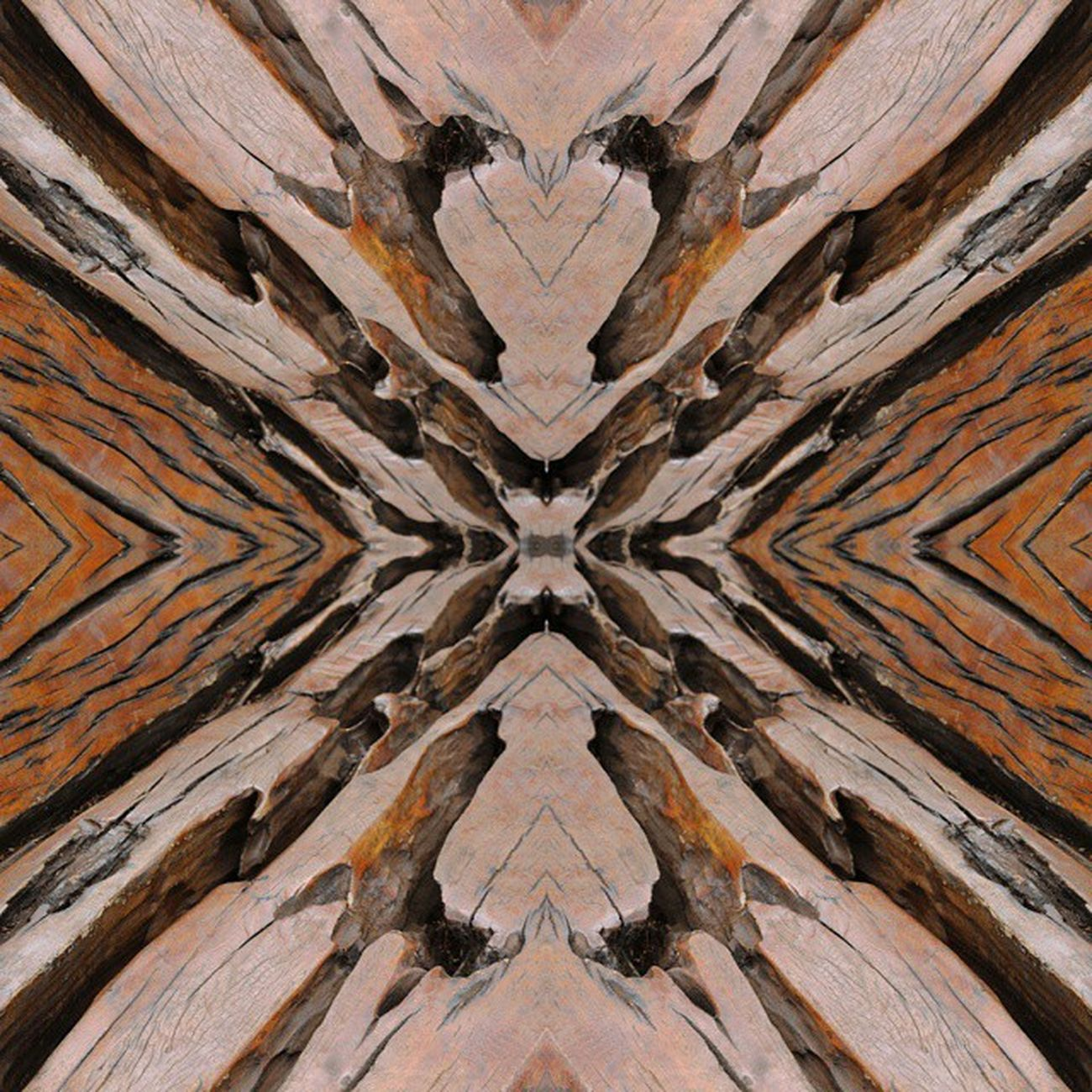 MIRRORS Tronco Arvore Inhotim Minasgerais tree trunk photoshop photo mirrorphoto mirrors