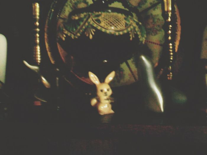 Bunny  Usagi Tokki