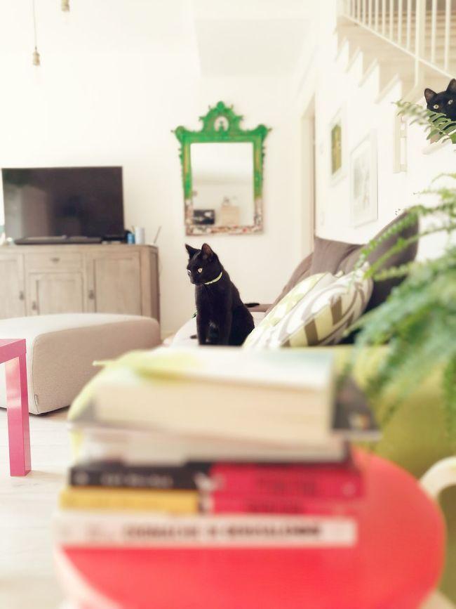 Black Cats Black Cats Are Beautiful Black Cats Lovers Indoors  Houseplant Selective Focus Feline Domestic Cat Pets Black Cat No People Sofa House