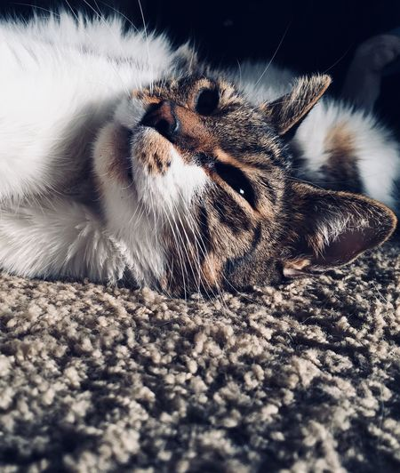 My handsome cat Domestic Cat Animal Themes One Animal Whisker Domestic Animals Feline Pets