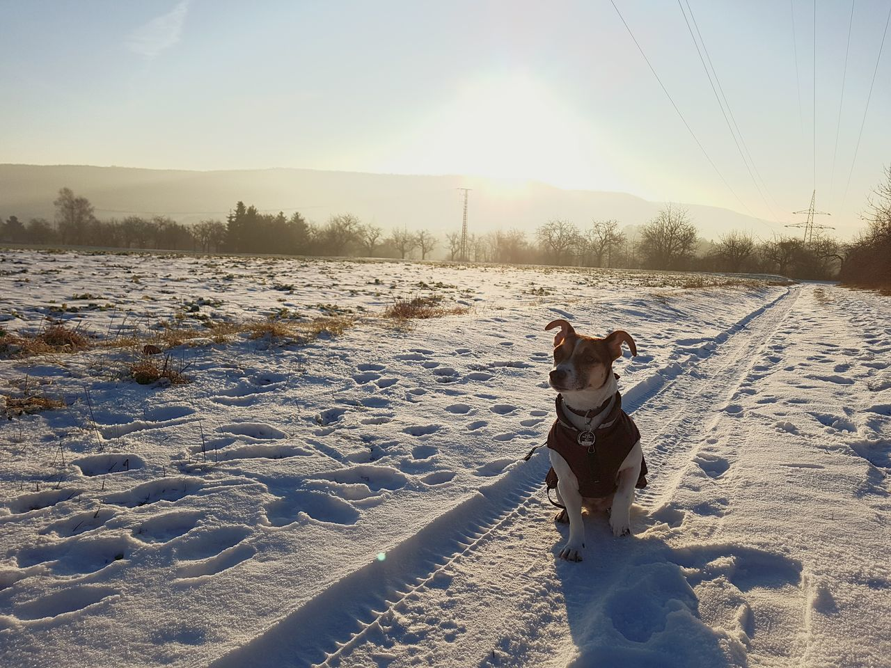 dog, winter, pets, cold temperature, domestic animals, snow, one animal, animal themes, mammal, weather, nature, sunlight, outdoors, no people, sky, day, beauty in nature