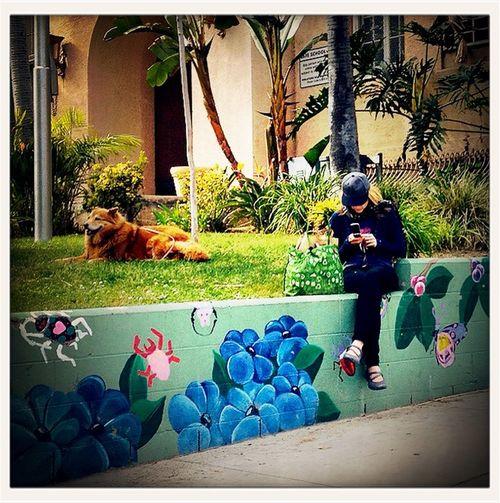 Walking the human at Hollywood Walking The Human