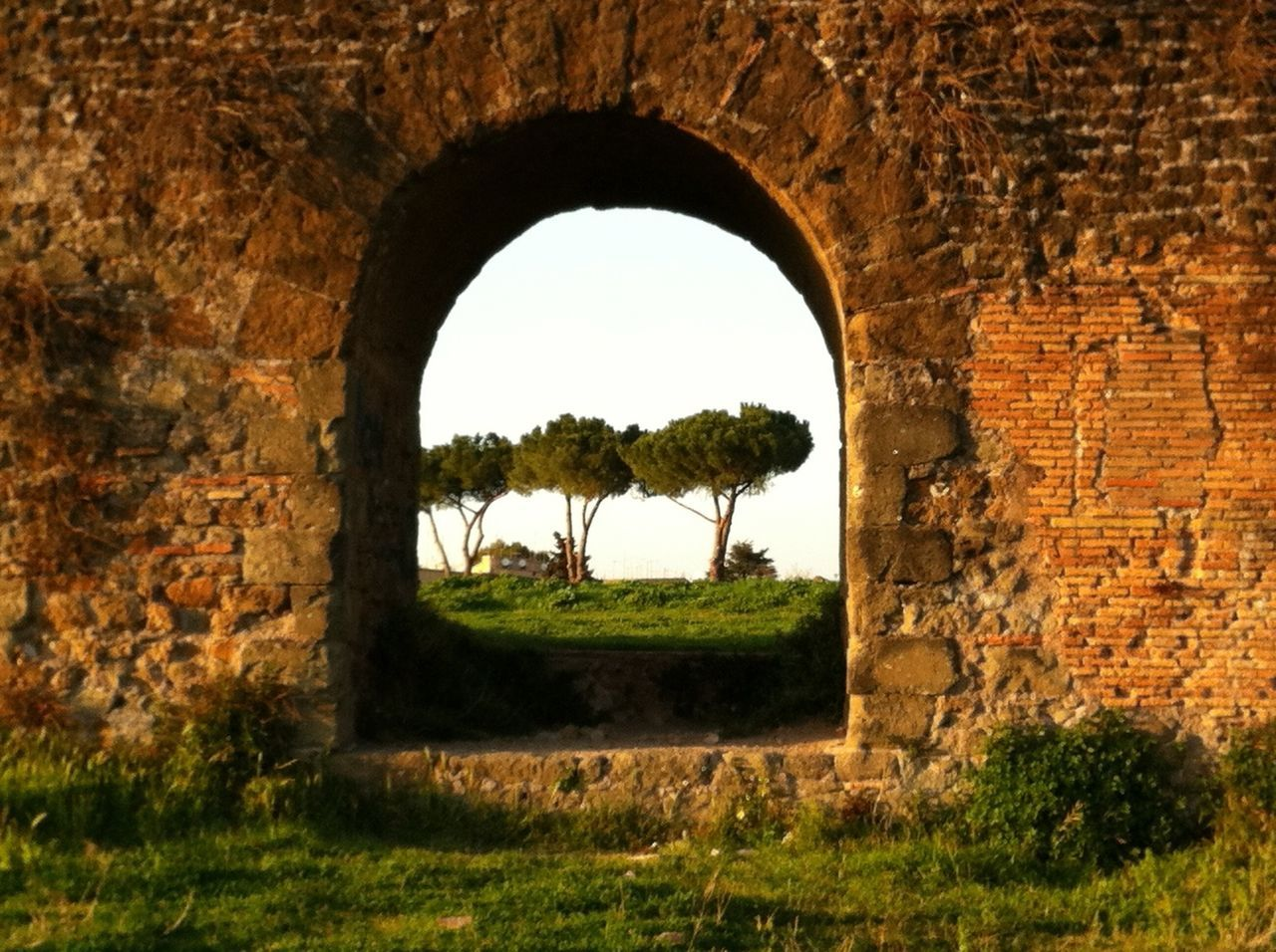 Ancient Civilization Aqueduct Arch Branch Day Historic History Italy Old Outdoors Park Pinetrees Rome Ruined The Way Forward Tree Tree Trunk Treelined Woods