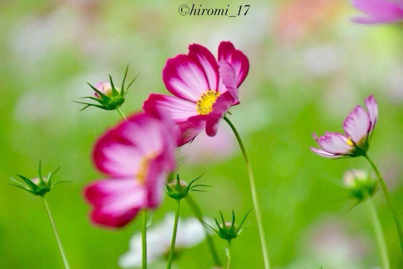 Hello World StreamzooFlowers Enjoying Life EyeEm Best Shots - Flowers