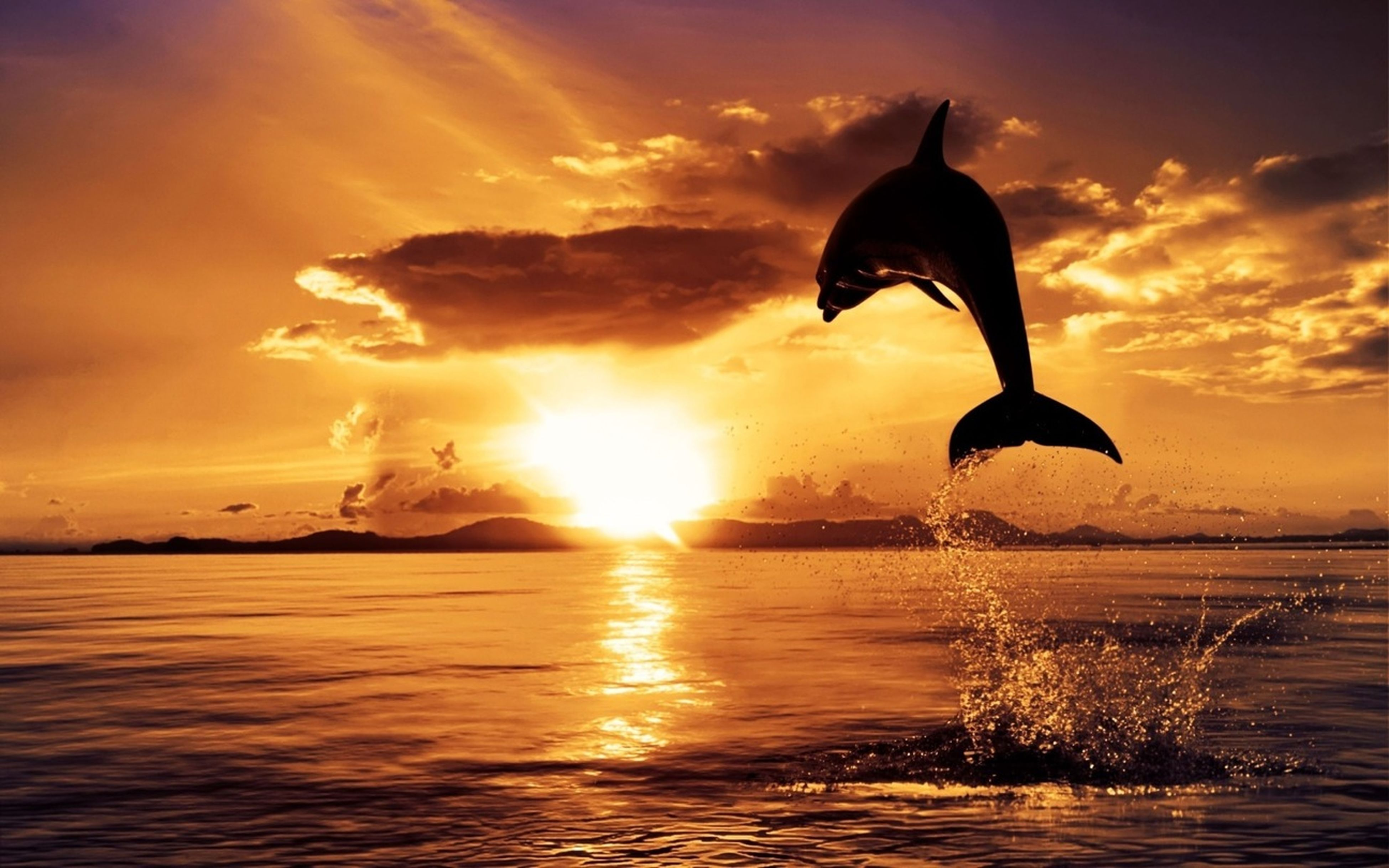 sunset, bird, water, animal themes, one animal, silhouette, animals in the wild, waterfront, wildlife, beauty in nature, reflection, sky, sun, orange color, rippled, nature, scenics, flying, tranquil scene, tranquility