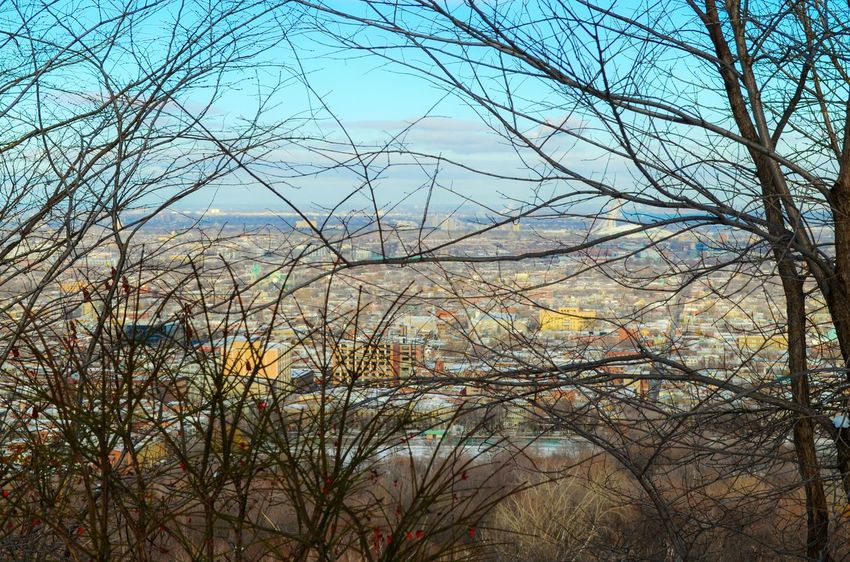 Montreal through the branches Nature Tree Sky Growth No People Beauty In Nature Bare Tree Tranquility Clear Sky Outdoors Low Angle View Scenics Branch Day Close-up On Eyeem High Angle View Fresh On Eyeem  EyeEm Best Shots - Nature Eyeem Photography Mountain Cloud - Sky EyeEm Best Shots - Landscape Tranquil Scene