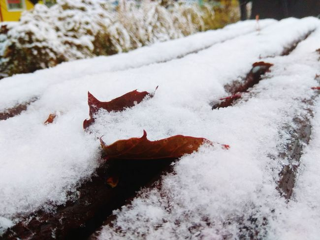 First snow No People Cold Temperature Day Winter Outdoors Snow Nature Leaves Beauty In Nature Perspectives On Nature
