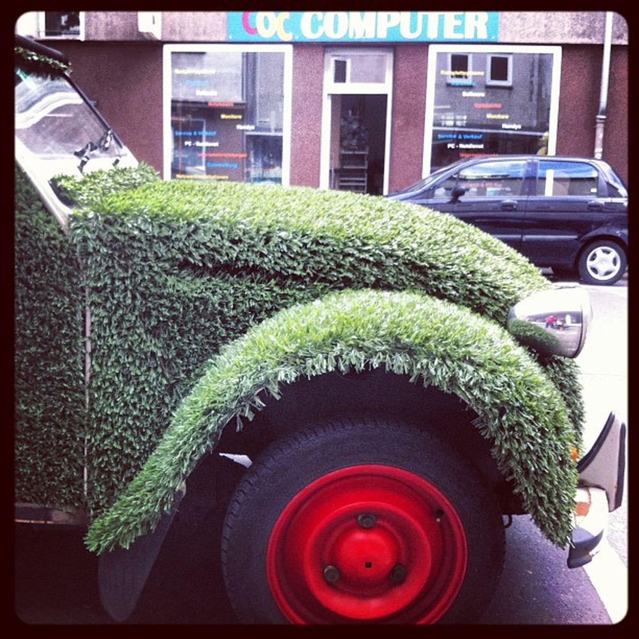 Gras-Auto gesichtet Auto Lustig Funny Car essen