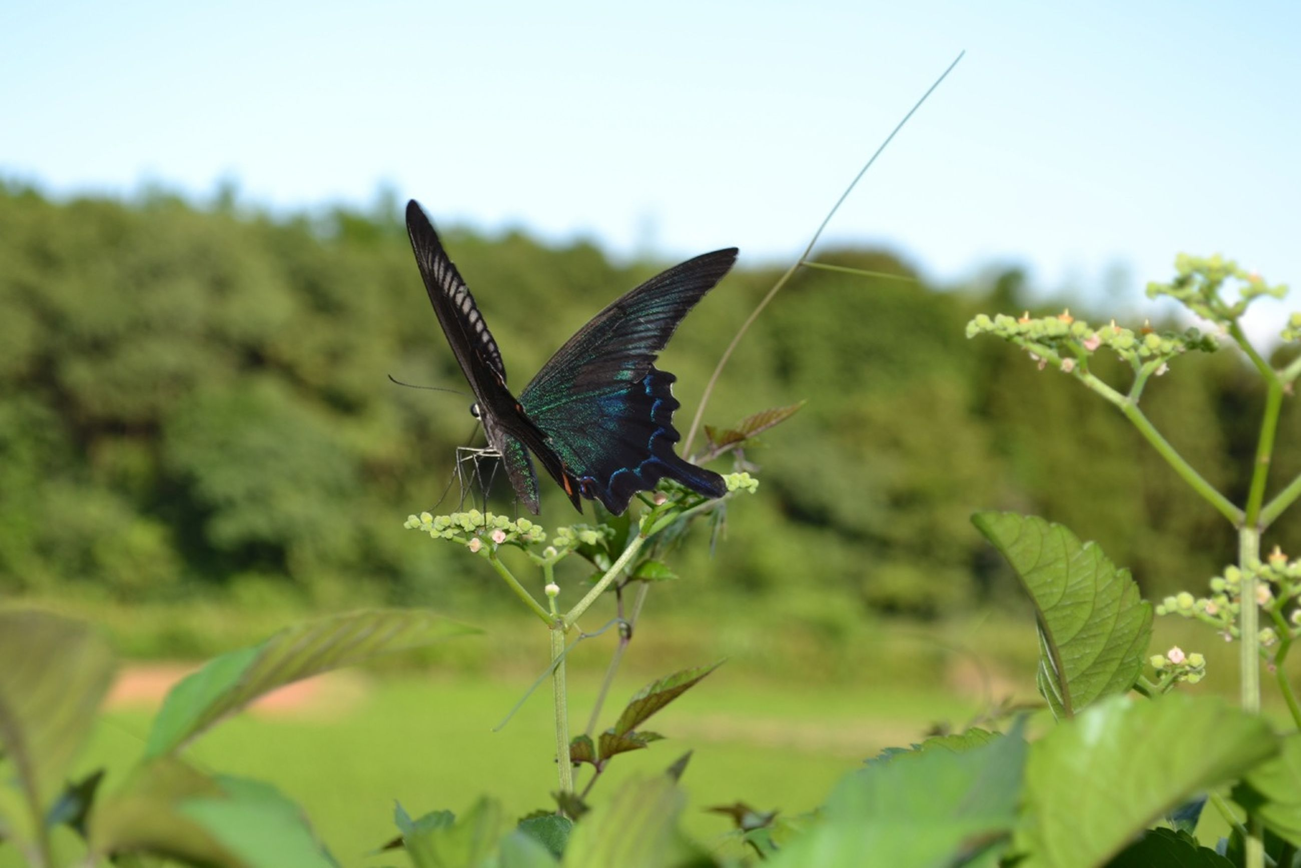 insect, one animal, animal themes, animals in the wild, wildlife, butterfly - insect, butterfly, focus on foreground, plant, green color, close-up, leaf, animal wing, nature, growth, beauty in nature, dragonfly, day, outdoors, full length