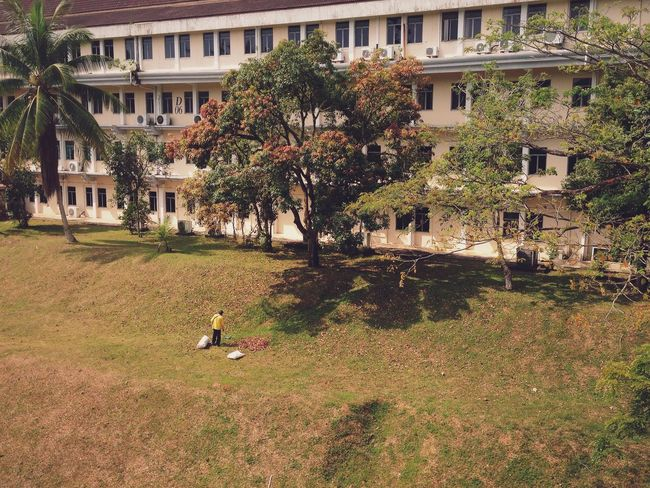 Landscape worker collecting dead leaves Architecture Building Building Exterior Built Structure City Day Grass Green Color Growth Here Belongs To Me High Angle View House Lawn Leaves Men Outdoors People Watching Person Plant Residential Building Residential Structure Tree Urban Spring Fever Nature Nature_collection