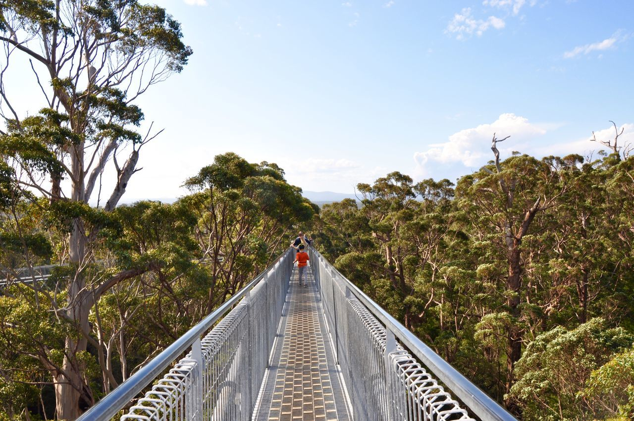 The Tree Top Walk pedestrian bridge in the tingle tree forest with tourists near Denmark, Western Australia. Architecture Bridge Bridge - Man Made Structure Day Diminishing Perspective Footbridge Forest Green Color Growth Nature Plant Railing Scenics Sky The Way Forward Tingle Trees Tourism Tourist Tourist Attraction  Tranquil Scene Tree Tree Top Walk Valley Of The Giants Western Australia WoodLand