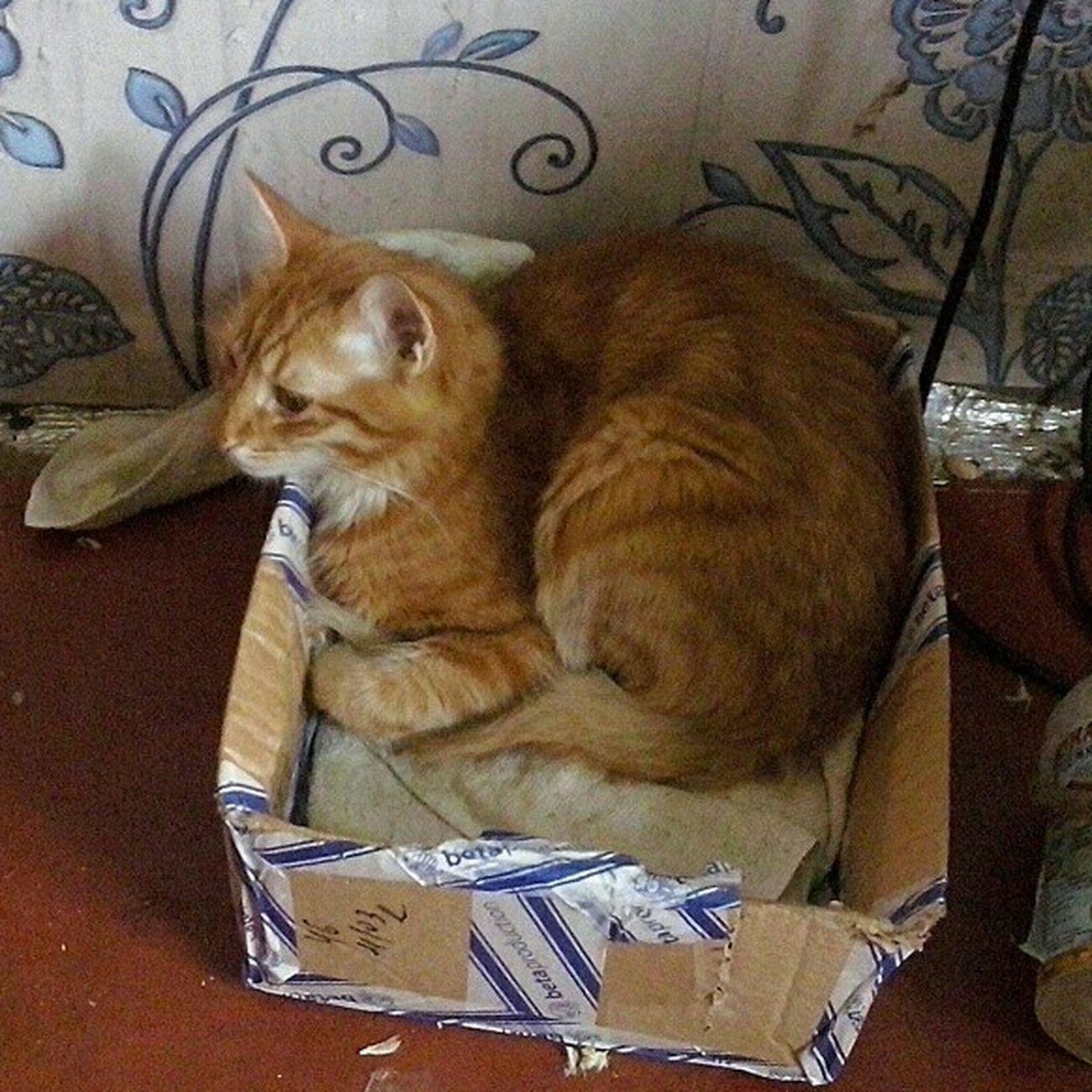 Тим Тимыч кот в коробке Котэ 😻 котэйка рыжий кот рыжий Popular Popular Photos My Cat Pet Photography